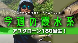 アユクローン180誕生!『霞オカッパリガイド・アユサンの今週の霞水系』