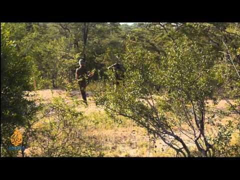 Featured Documentary - Wildlife Warzone - Episode 5: Suspicious activity