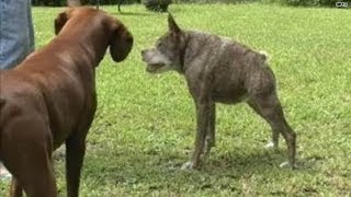 Meet the 2nd 'ugliest' dog in the world