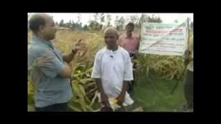 ISOPOM Maize Crop after Kharif Paddy ATC RKMA W  Bengal