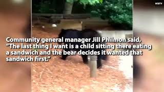 WATCH : Bear Caught Snarfing Down Family Picnic