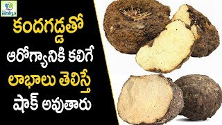 Health Benefits Of  Elephant Yam Kanda Gadda - Healthy Foods || Mana Arogyam
