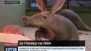 Екатеринбургский трубкозуб Ека переезжает в Чехию