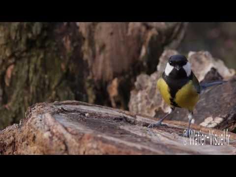 Oiseaux du jardin pèle mêle de plumes et de couleurs