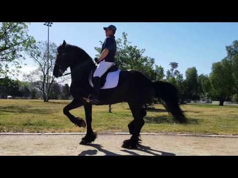 "Dancing Friesian - ""Santiago"" | Gustavo Lopez - Trainer"