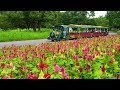 TOKYO.Blooming Flowers through the Extreme heat of Summer at Showa Kinen Park. #4K #酷暑 #猛暑