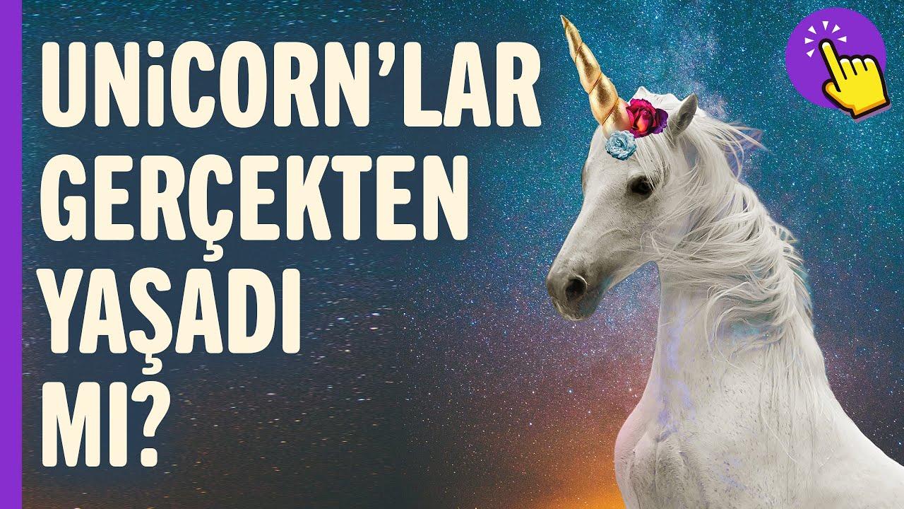 Unicornlar gerçek mi? Gerçekten var oldu mu? | Hayvanlar Alemi | İlginç bilgiler | Aklında olsun
