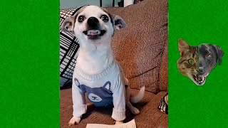 Funny animals 😻 compilation #9 - Best Of The 2021 Funny Animal Videos 😹 - Cutest Animals Ever