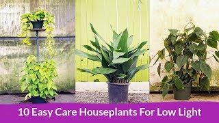 10 Easy Care Houseplants For Low Light / Joy Us Garden