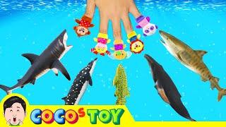 우리집 어항 속 해양동물키우기, 어린이 동물만화, 해양동물 이름 외우기,코레샵ㅣ꼬꼬스토이