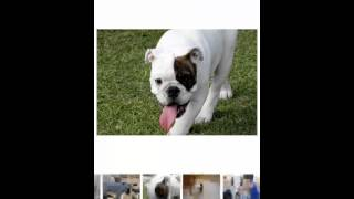 Dogs Images Android App
