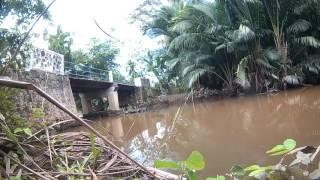 mancing gabus sumatera barat 2 (Snakehead Casting West Sumatra) mimix kura buzz