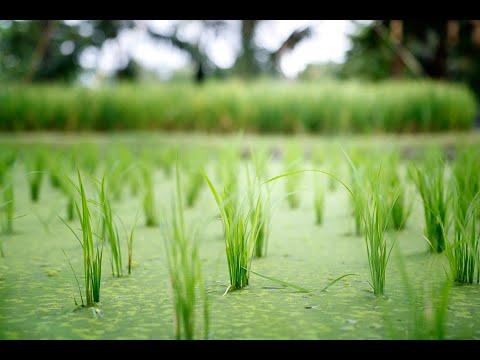 #العراق يحظر #زراعة الأرز لتوفير #المياه العذبة للمواطنين  - 16:22-2018 / 6 / 17