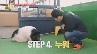 천재 돼지 봤음? 개인기 대방출! 꼬마 돼지 마니 [류수영의 동물티비] | KBS 210211방송