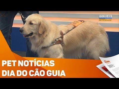 Pet Notícias: Dia Do Cão-guia - TV SOROCABA/SBT