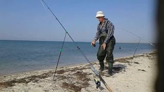 Ловля пеленгаса 2 удачных дня на море