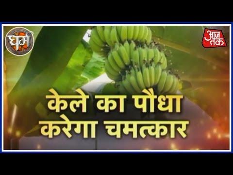 Dharm: Magic Of Banana Plant