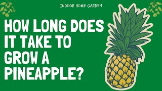 How Long Does Iт Take A Pineapple To Grow?