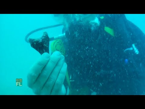 How To Do Megalodon Shark Tooth Diving