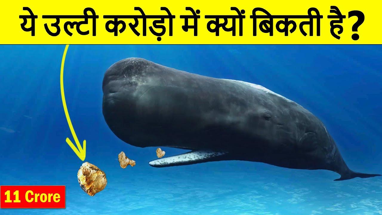 Why Whale Vomit is so Expensive? What is Ambergris? व्हेल की उल्टी इतनी महंगी क्यों होती है?