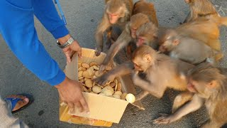 Hungry monkey and dog eat one box biscuits in lockdown | Feeding hungry animals | monkey video