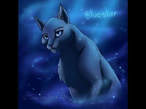 top ten most beautiful she-cats(Video requested by PumastarofDarkclan)