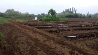 Proyecto de riego para 5,5 hectareas de frambuesas  organicas con cinta exudante a baja  presión