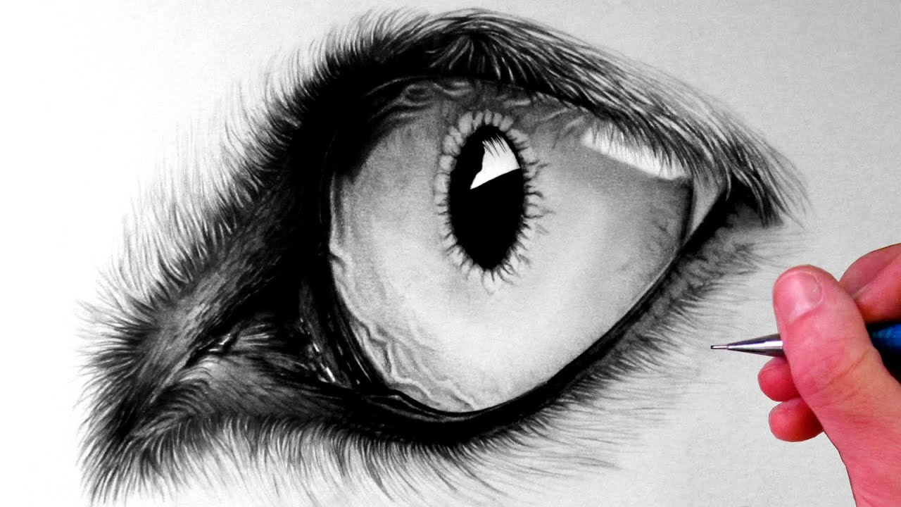 How to draw a wolf eye youtube ccuart Image collections