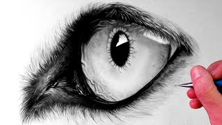 How to Draw a Wolf Eye