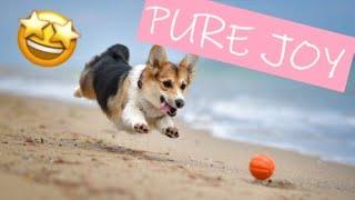 Cute Dog Viral Videos   Best Dog Compilation 2021   Ep. 29
