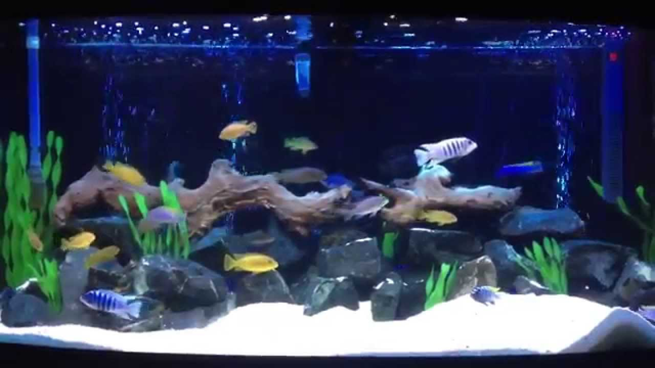 Hervorragend Juwel vision 260 Malawi tank with air curtain light - YouTube NL91