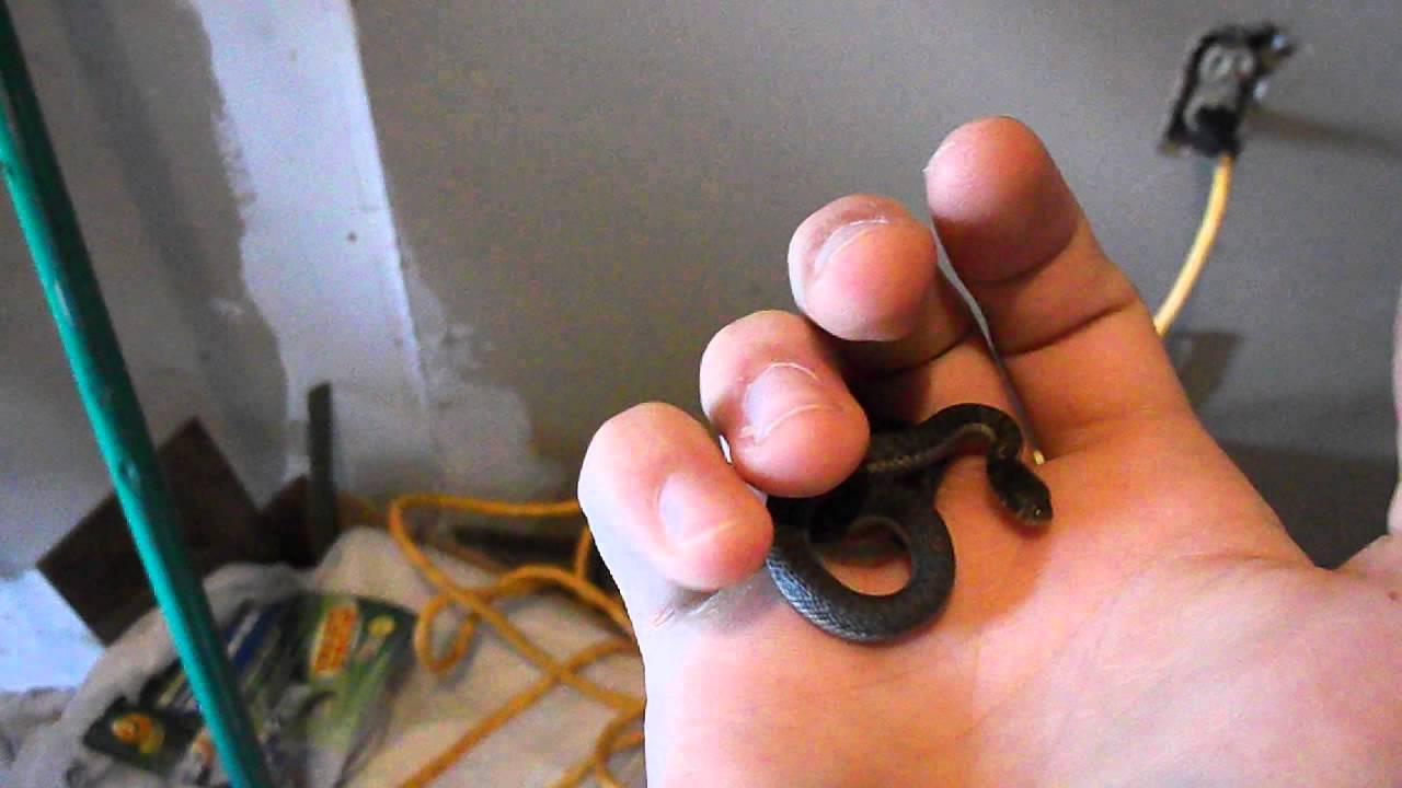 backyard herping baby garter snake youtube