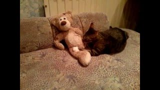 даже кошки делают ЭТО)))))