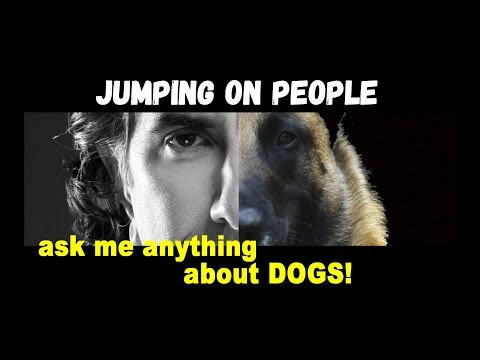 Dog Jumps up on People in Public - Dog Training Video - Robert Cabral