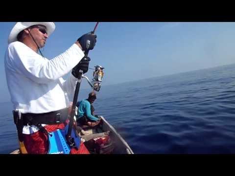 Big Thresher Shark caught by Jigging in Socotra