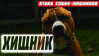 Хищник (2018) - Атака собак-хищников