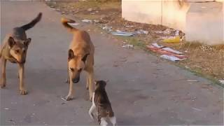 Funny Animals Cat And Dog Cat Wins Two Dogs 2018
