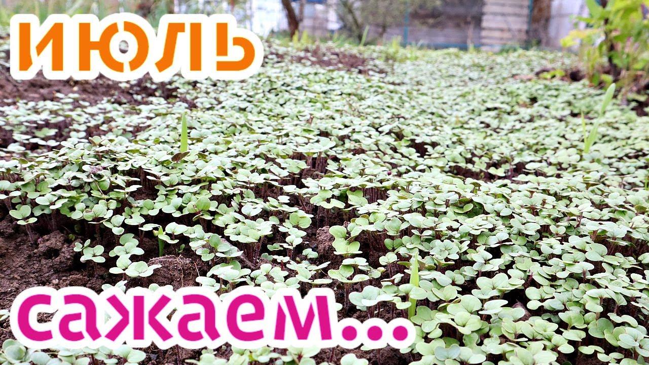 Посадите это на огороде в июле срочно! Что посадить на огороде в июле?