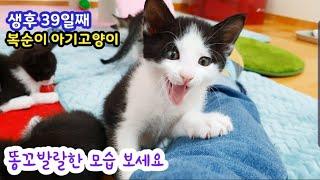 오늘 금요일 밤 8시 실방! 생후 39일째 아기고양이 복순이와 6마리 아이들 보러오세요