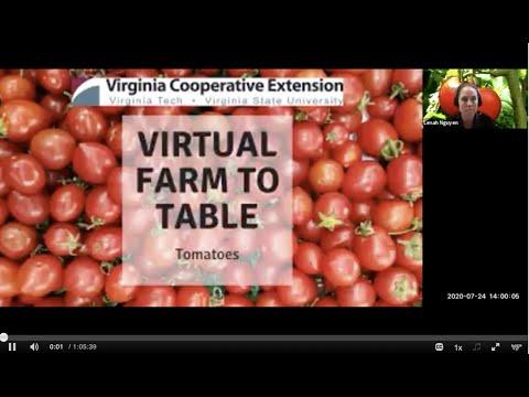Virginia Virtual Farm To Table: Tomatoes