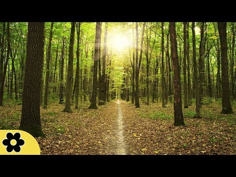 Meditation Music, Concentration Music, Study Music, Relaxing Music for Studying, Alpha Waves, ✿3237C