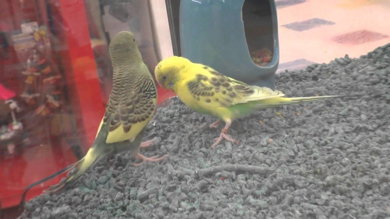 Petsmart Parrots Wwwtollebildcom