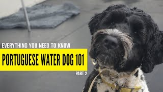 Everything You Need to Know About Portuguese Water Dogs (Part 2)