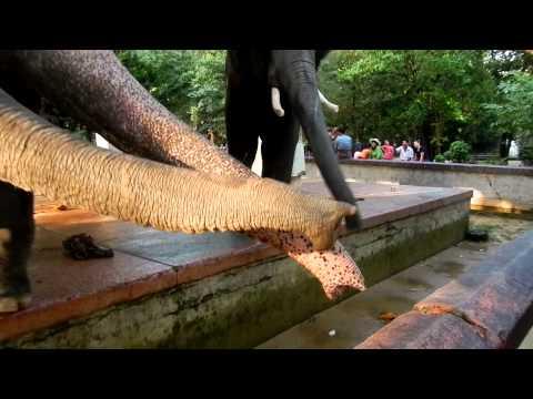 myanmar zoo elephants