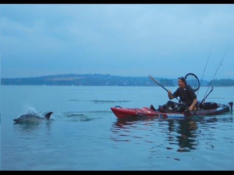 Rencontre avec les dauphins en corse