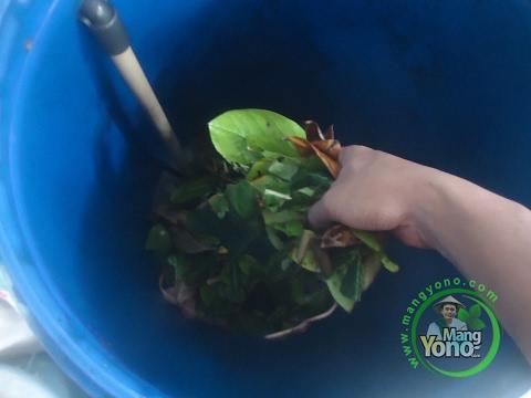 Cara pembuatan pupuk organik padat dan cair dari sampah dapur youtube cara pembuatan pupuk organik padat dan cair dari sampah dapur ccuart Choice Image
