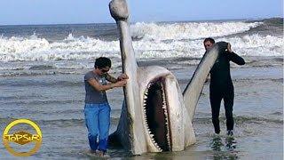 10 อันดับ ฉลามที่ใหญ่ที่สุดในโลก (ดุ!!)