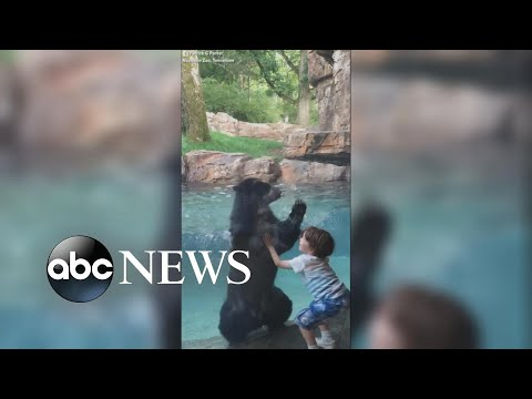 Rich Kaminski - Bear And Boy Jumping For Joy