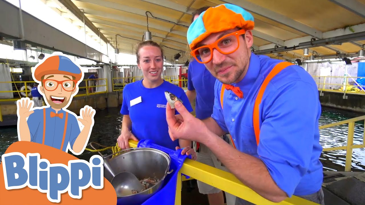 Blippi Visits The Florida Aquarium | Learn About  Animals for Kids | Educational Videos For Toddlers