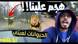 in the jungle ll الننو و ام الننو في الادغال!! اكشششن
